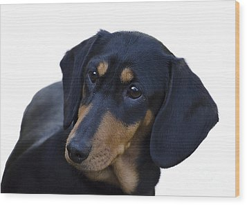 Dachshund Wood Print by Linsey Williams