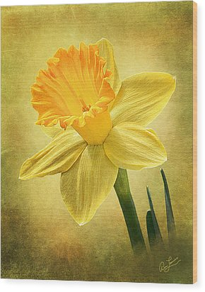 Wood Print featuring the photograph Daffodil by Ann Lauwers