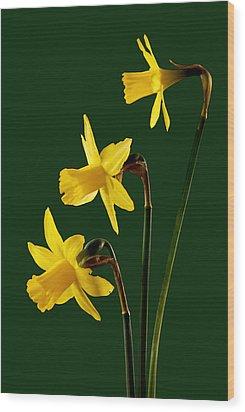 Daffodil Arrangment Wood Print by Pete Hemington