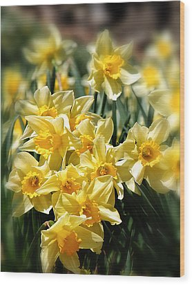 Daffodil Wood Print by Bill Wakeley