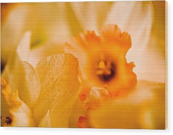 Daffodil Bouquet Wood Print by John Holloway