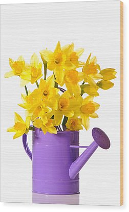 Daffodil Display Wood Print by Amanda Elwell