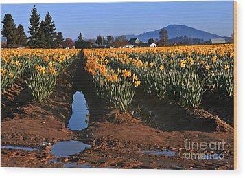 Daffodil Field After A Spring Rain Wood Print