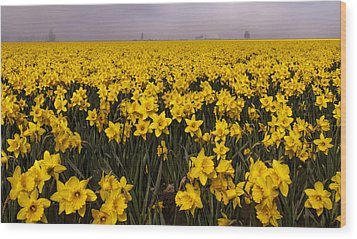 Daffodil Fields Of Fog Wood Print