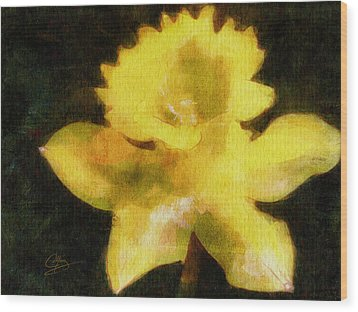 Daffodil Wood Print by Greg Collins