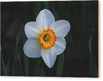 Wood Print featuring the photograph Daffodil In Riverside Park by Bill Swartwout