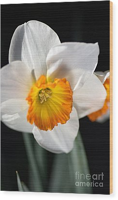 Daffodil In White Wood Print by Joy Watson