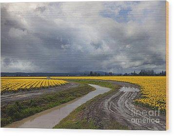 Daffodil Lane Wood Print by Mike  Dawson