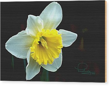 Wood Print featuring the photograph Daffodil by Ludwig Keck