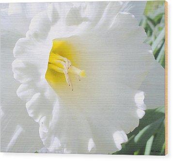 Daffodil Wood Print by Mary Beth Landis