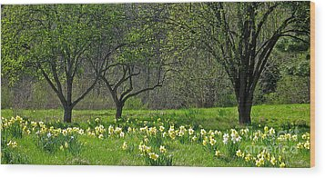 Daffodil Meadow Wood Print by Ann Horn