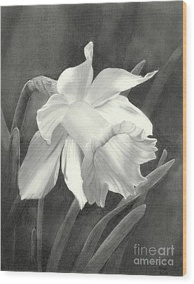 Daffodil Wood Print by Nicola Butt