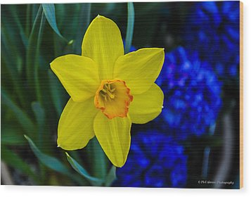 Wood Print featuring the photograph Daffodil by Phil Abrams