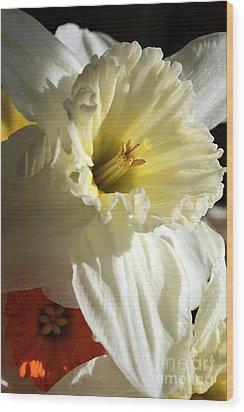 Daffodil Still Life Wood Print