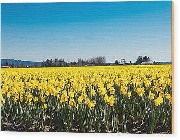 Daffodils And Blue Skies Wood Print