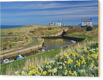 Seaton Sluice Harbour Daffodils Wood Print