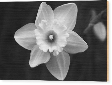 Daffodils - Infrared 01 Wood Print