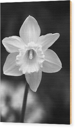 Daffodils - Infrared 10 Wood Print
