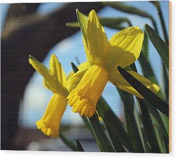 Daffodils Wood Print by Joseph Skompski