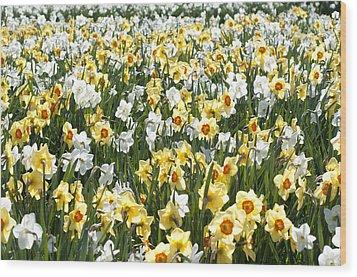 Daffodils Wood Print by Lana Enderle