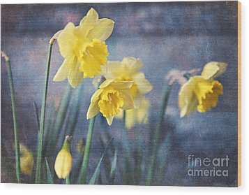 Wood Print featuring the photograph Daffodils by Sylvia Cook
