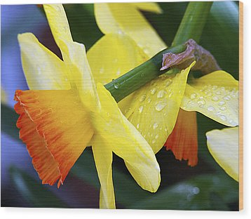 Wood Print featuring the photograph Daffodils With Rain by Joe Schofield