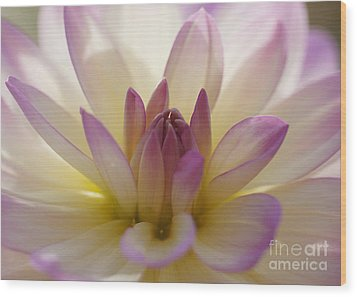 Wood Print featuring the photograph Dahlia 1 by Rudi Prott