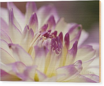 Wood Print featuring the photograph Dahlia 2 by Rudi Prott