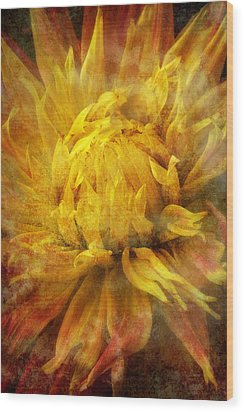 Dahlia Abstract Wood Print by Garry Gay