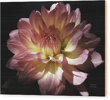 Dahlia Burst Of Pink And Yellow Wood Print
