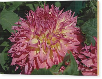 Wood Print featuring the photograph Dahlia by Christiane Hellner-OBrien