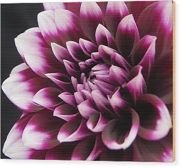 Dahlia Delightful Wood Print by Kathi Mirto