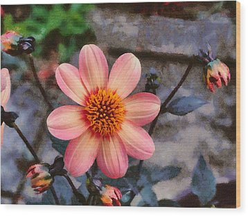 Dahlia First Love Wood Print