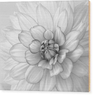 Dahlia Flower Black And White Wood Print by Kim Hojnacki