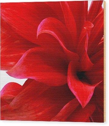 Dahlia II Wood Print