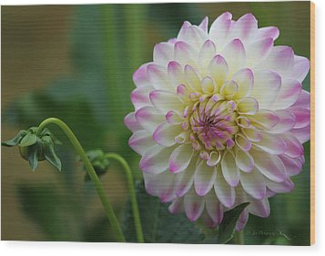 Dahlia In The Mist Wood Print by Jeanette C Landstrom