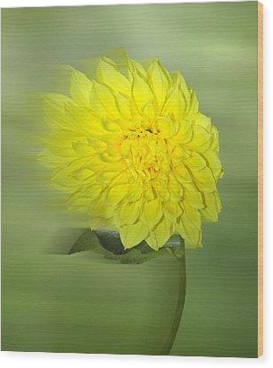 Dahlia In The Wind Wood Print