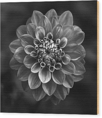 Dahlia Wood Print by Marc Huebner