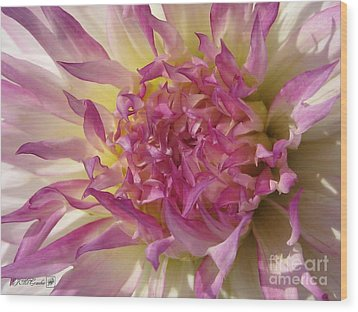 Wood Print featuring the photograph Dahlia Named Angela Dodi by J McCombie