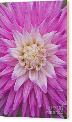Dahlia Ruskin Andrea Flower Wood Print by Tim Gainey