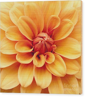 Dahlia Squared Wood Print by Anne Gilbert