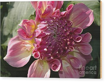 Wood Print featuring the photograph Dahlia V by Christiane Hellner-OBrien