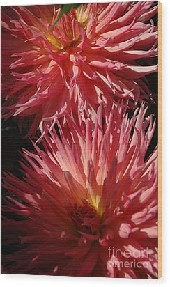 Wood Print featuring the photograph Dahlia Vi by Christiane Hellner-OBrien