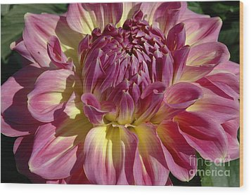 Wood Print featuring the photograph Dahlia Vii by Christiane Hellner-OBrien