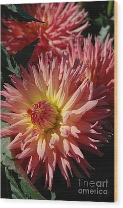 Wood Print featuring the photograph Dahlia Viii by Christiane Hellner-OBrien