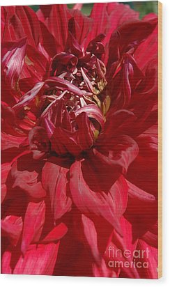 Wood Print featuring the photograph Dahlia Viiii by Christiane Hellner-OBrien