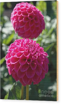 Wood Print featuring the photograph Dahlia Xi by Christiane Hellner-OBrien