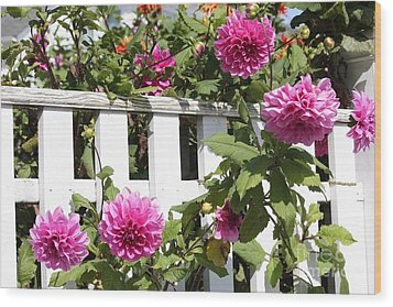 Dahlias Over The Fence Wood Print by Carol Groenen