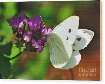Dainty Butterfly Wood Print by Kaye Menner