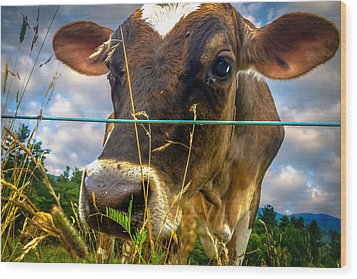 Dairy Cow Wood Print by Bob Orsillo